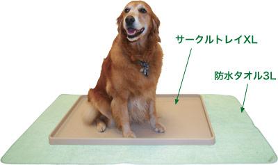 トイレ 大型 犬